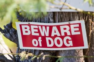 Arizona Dog Owner Liability